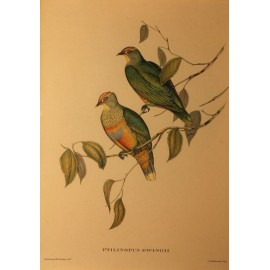 Paire de gravure encadrée oiseaux exotiques par J.Gould
